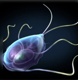 férgek betegség kezelése távolítsa el a férgeket a férgektől