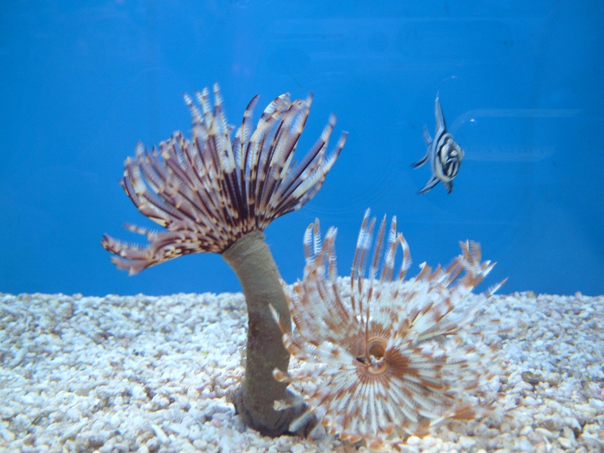 parazita gyógyszer halak számára mérgező megbízható gyógyszer a paraziták ár