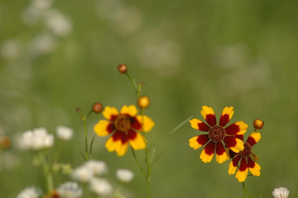 virág parazita Ázsiából