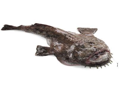 az emberre veszélyes halakban található szalagféreg)