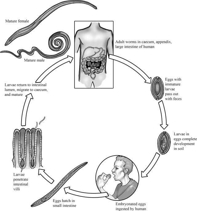 a paraziták kimutatása a testben