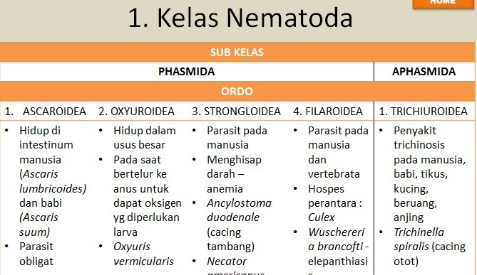 kelas dari phylum nemathelminthes