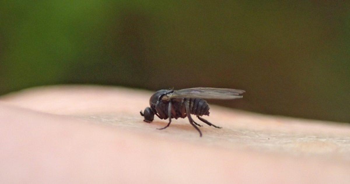 parazitacsípések kezelése