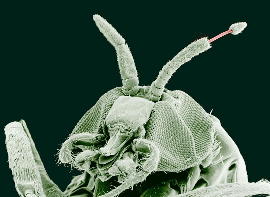 minden paraziták által kezelt betegség kezelése