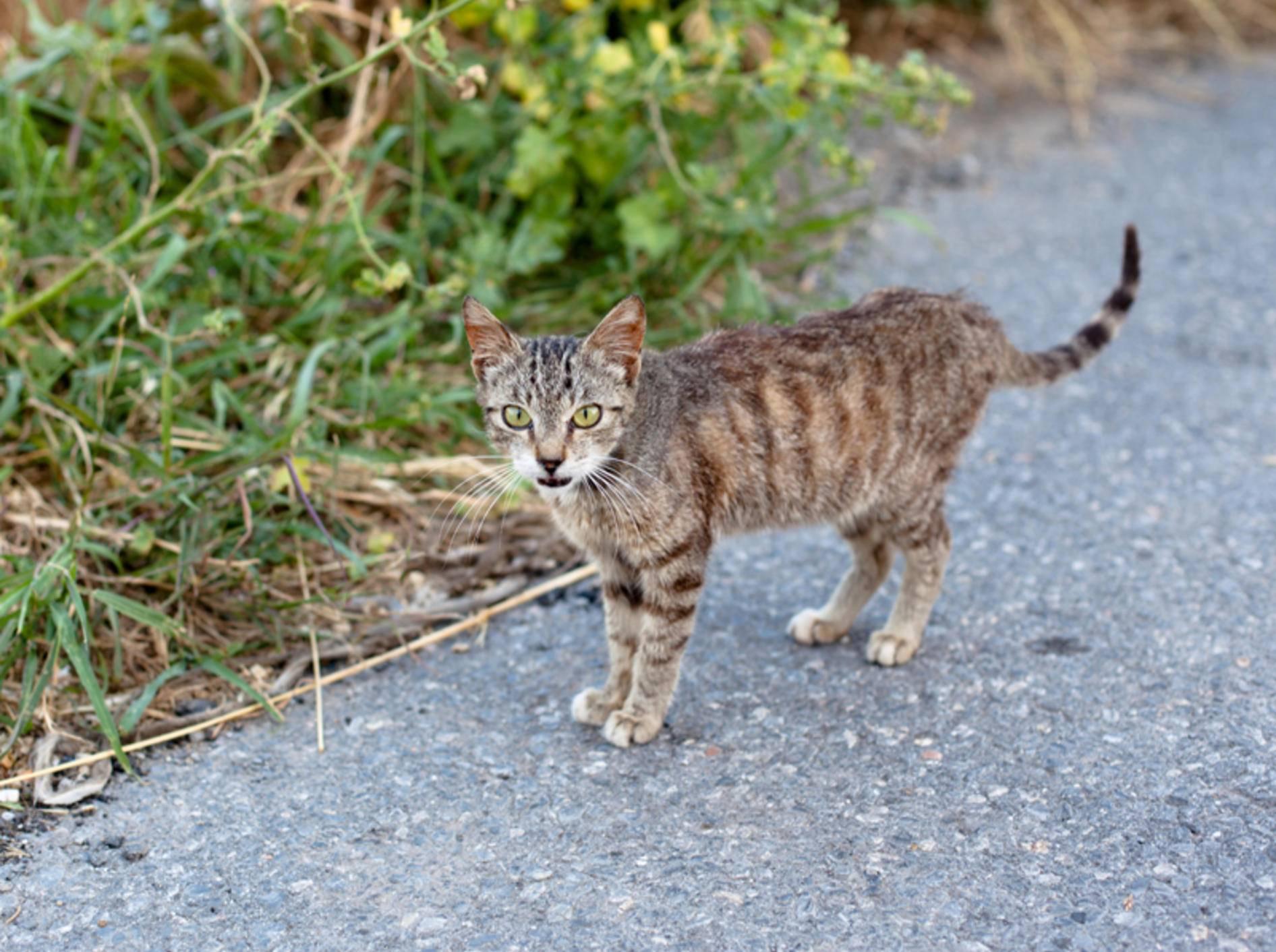 giardien katze kot típusú férgek a leggyakoribbak