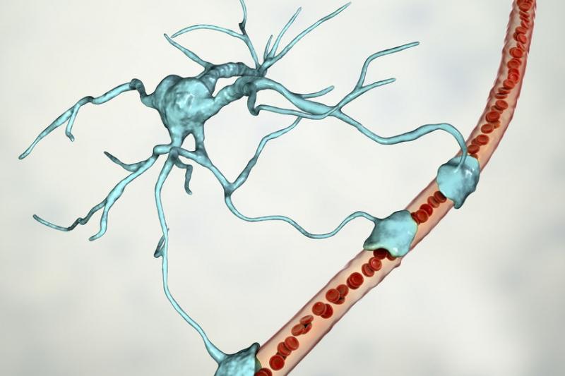természetes fokális hymenolepidosis helminták májkezelésben népi gyógyszerekkel