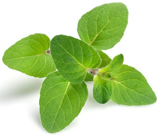 gyógynövény, amely lefogy
