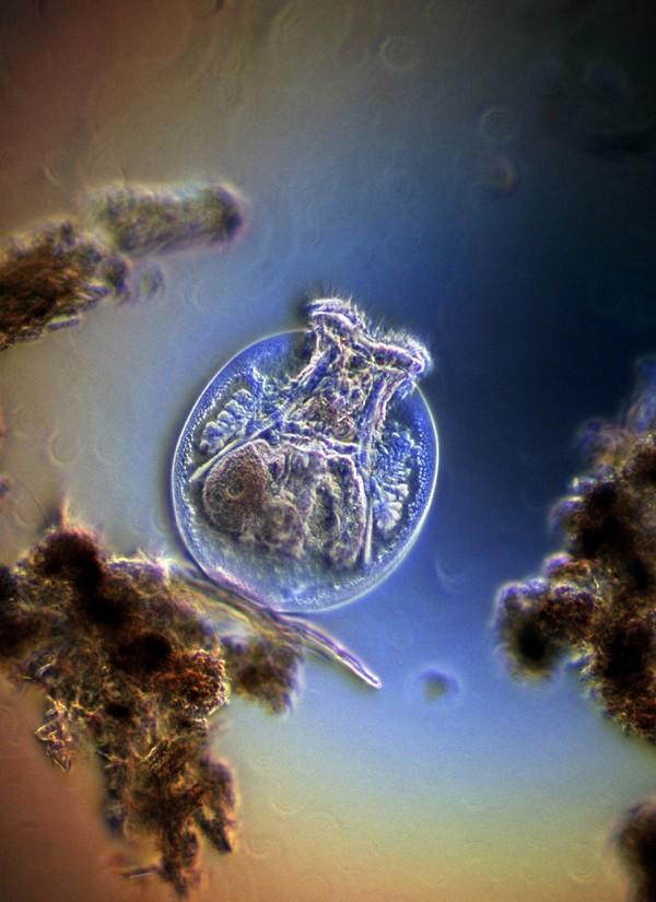 tabletták a májban élő paraziták számára