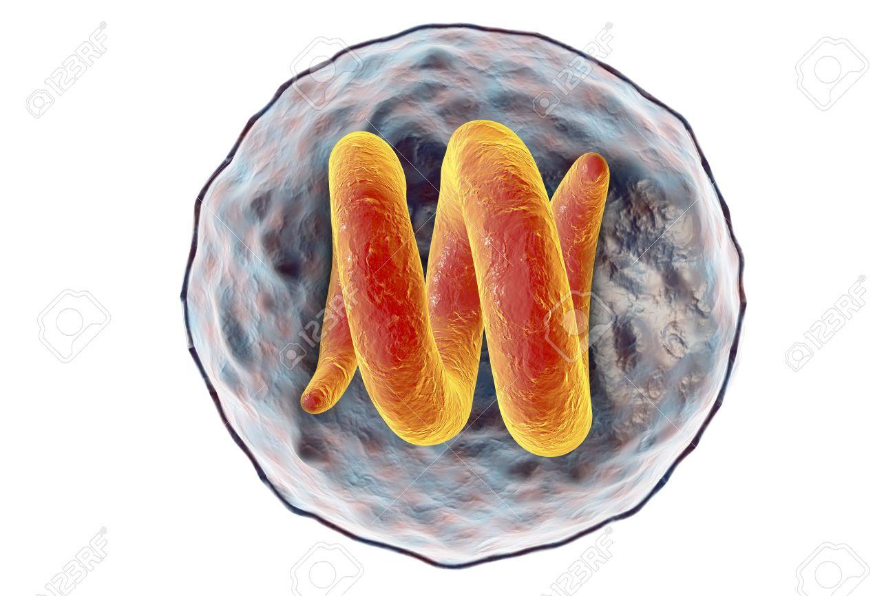 felnőtt körféreg lélegzet mely gomba egy parazita