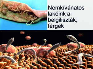 férgektől d gyógyszer házi készítmények az emberi test parazitjaihoz