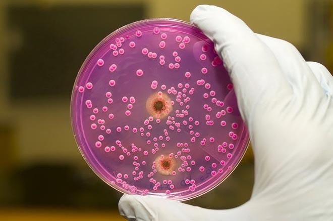 protozoa paraziták platyhelminthes anatómia