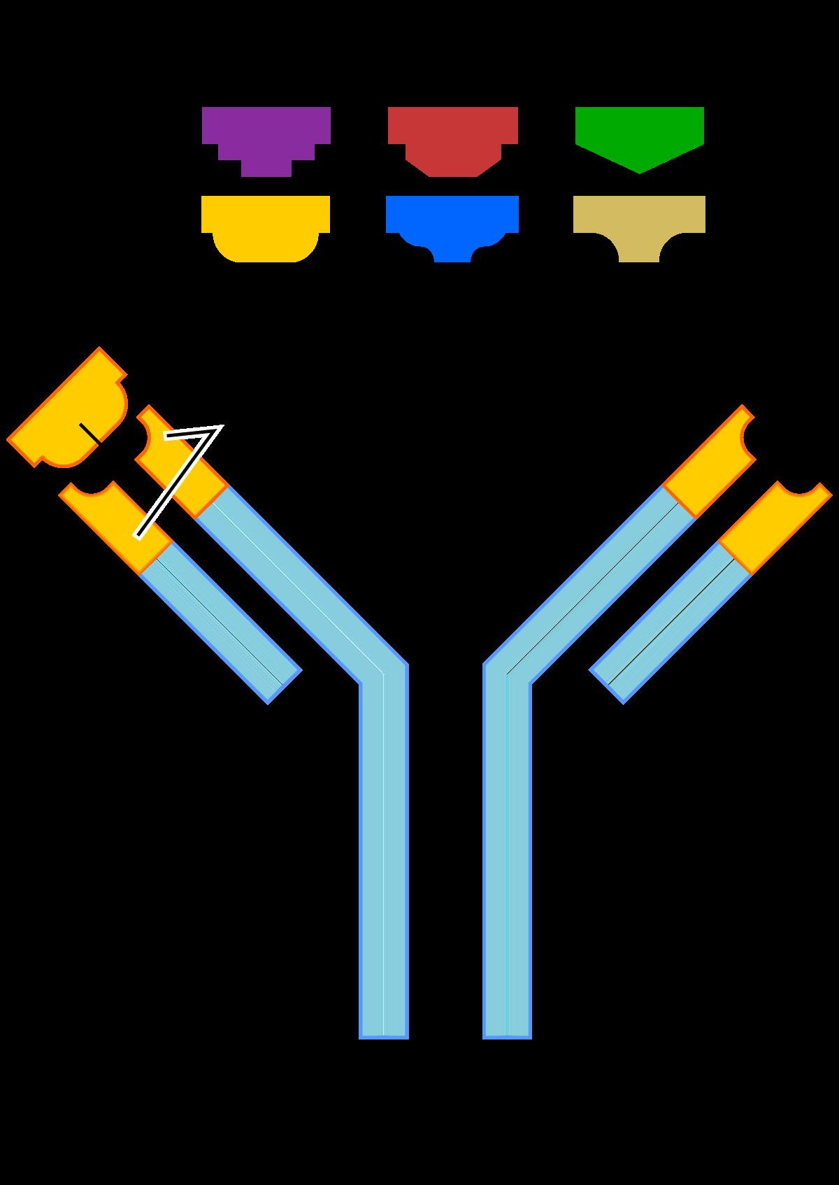 antitest a kerekesférgek kezelésében pozitív eredmény