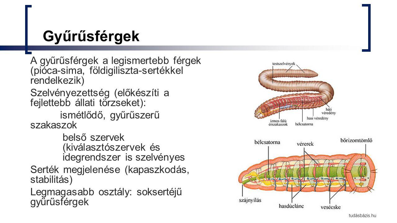 széles hatású férgek gyógymódja egy parazita pirula