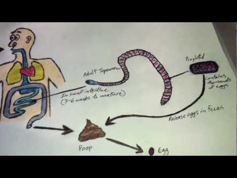 fej paraziták tisztítása gyermekeknek szánt készítmények parazitákból