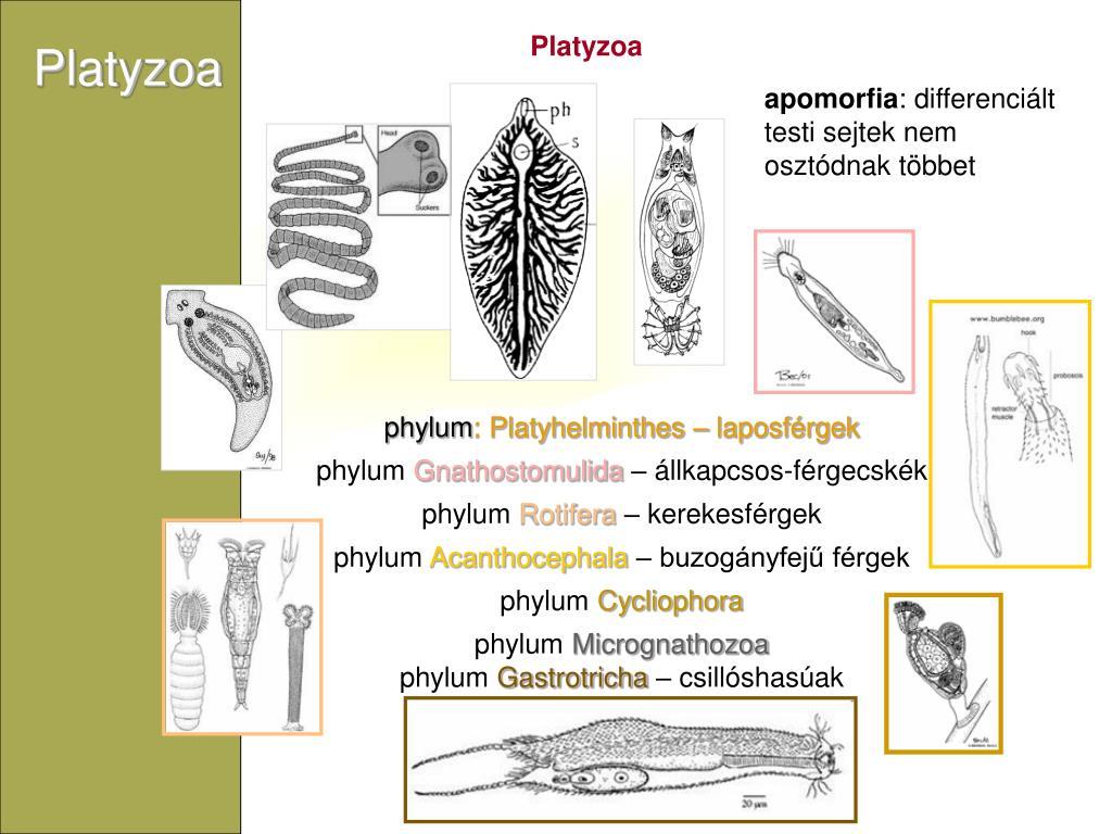paraziták az emberi hólyag kezelésében