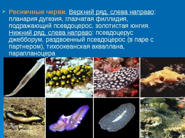 gyógymód férgeknek egy tinédzser számára gyógyszer a rókagombák parazita tablettákhoz