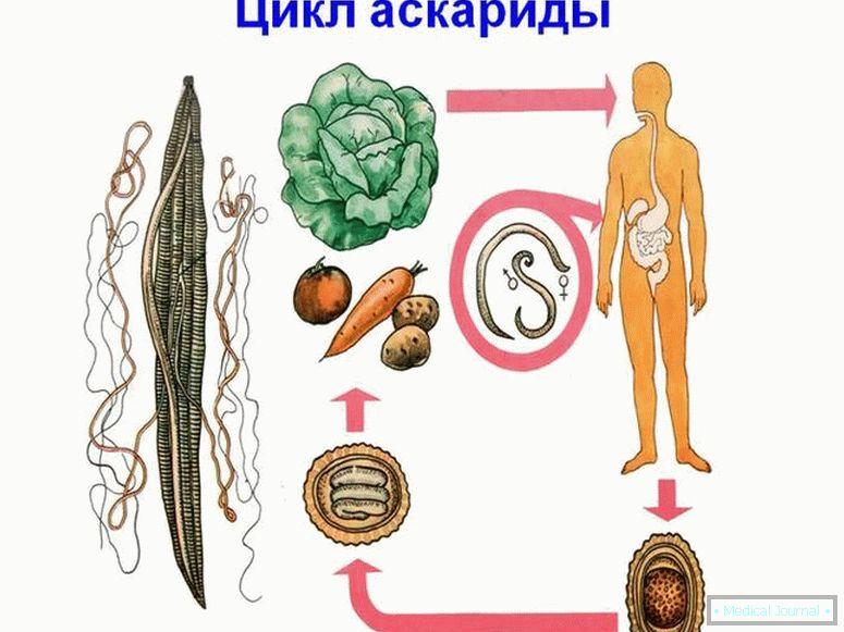 készítsen igazolást az enterobiasisról