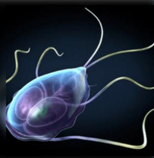 a parazita testének megtisztítása lenmaggal
