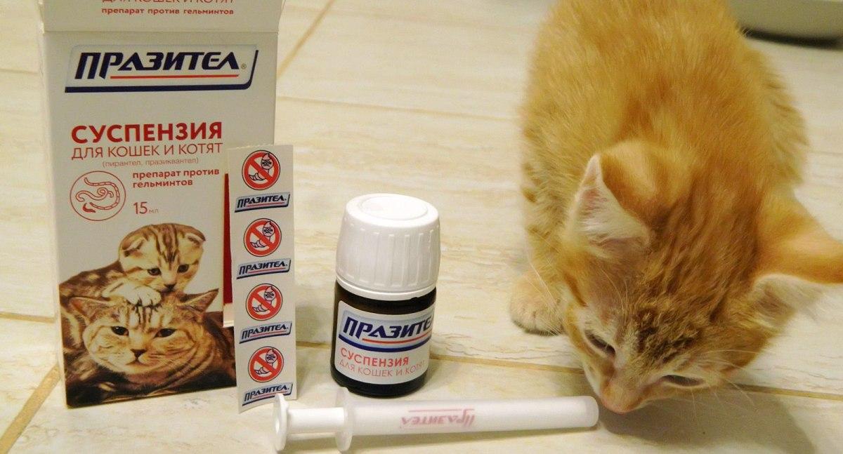 készítmények különféle típusú férgekhez jo parazita gyogymod