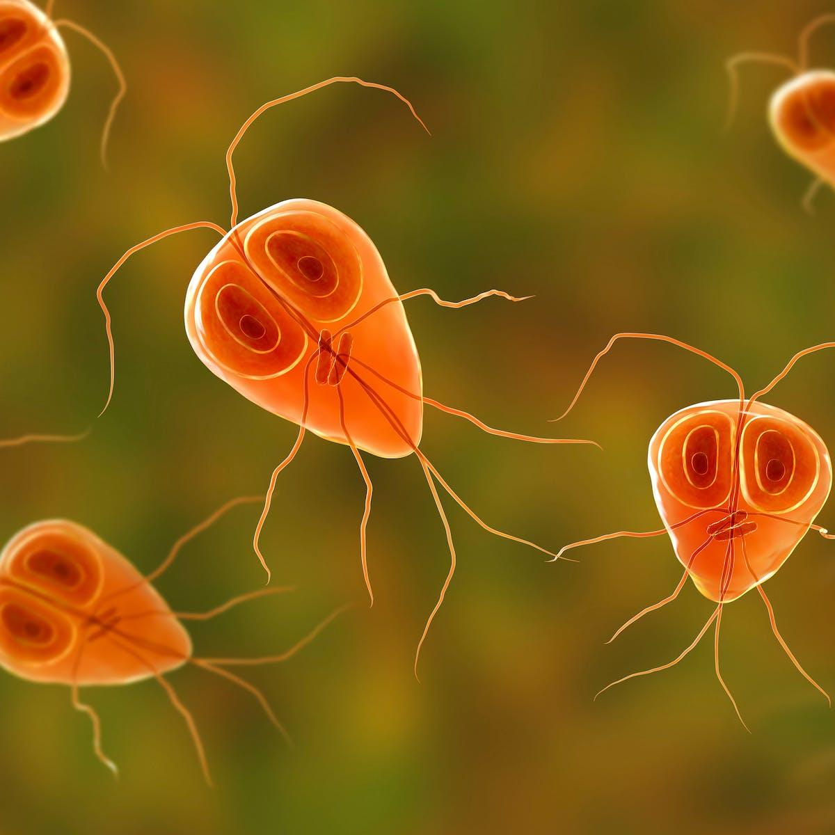 parazita gombák példák