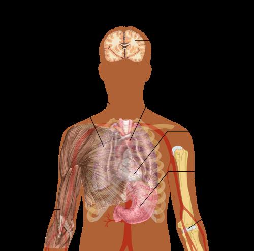 Az ureaplasma a férfiakban normális, vagy sem