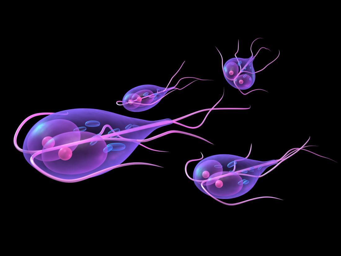 les parasites opportunistes parazita fekélyes vastagbélgyulladás kezelésére