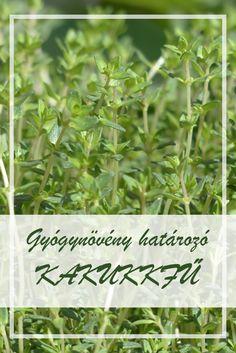 gyógynövények a gyermekek parazitáiból)