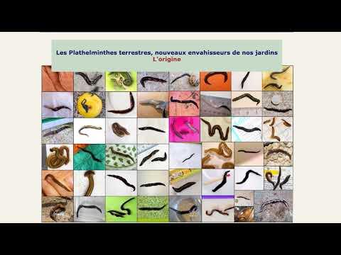 paraziták a kakukkban