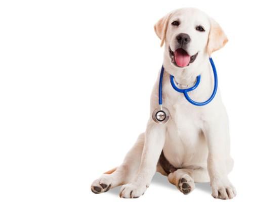állatorvosok gyógyszerei