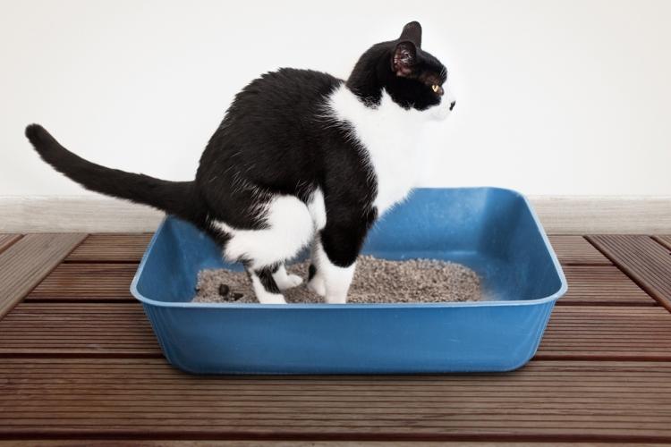 macska férget hány a bőr alatti féreg kezelése