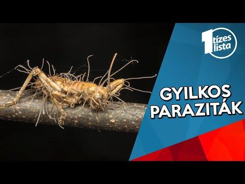 a nép által megszabadulva a parazitáktól gyógyulás az anthelmintikumokból