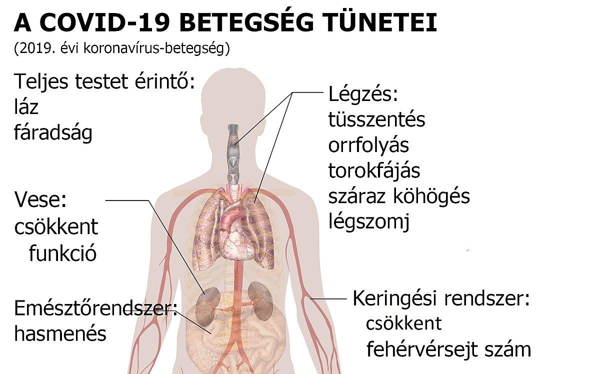 horoghernyó és nem kotorosis tünetek felnőtt férgek készítményei
