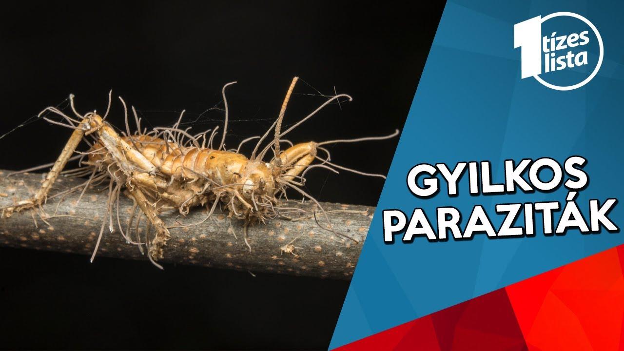 paraziták táplálkoznak féreg utasítás