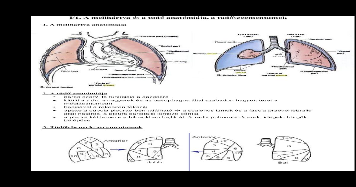 a helmintikus fertőzés jelei