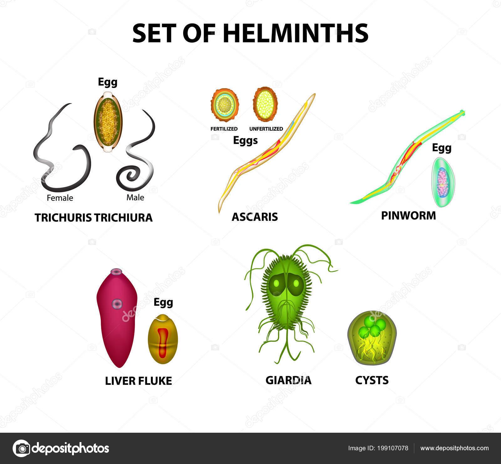 helminth tojások vizsgálata