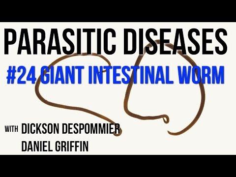 hogyan ellenőrzik a pinworms- et gyógyszerek lamblia és más paraziták számára