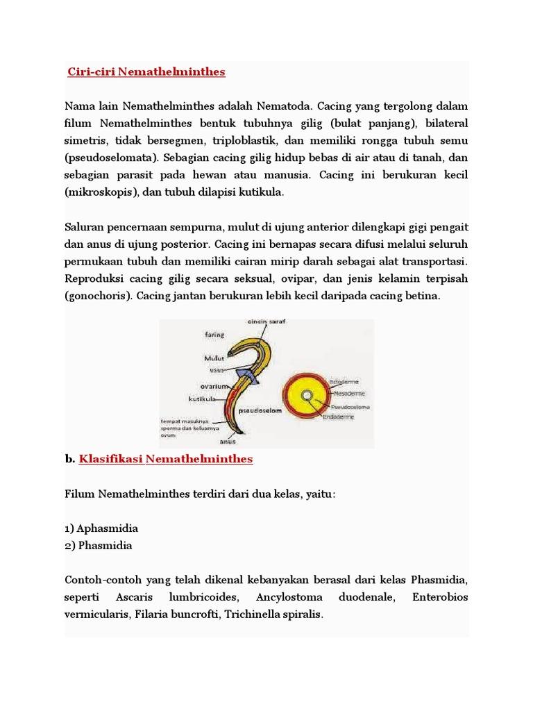 Trichinella paraziták - Vadbetegségek