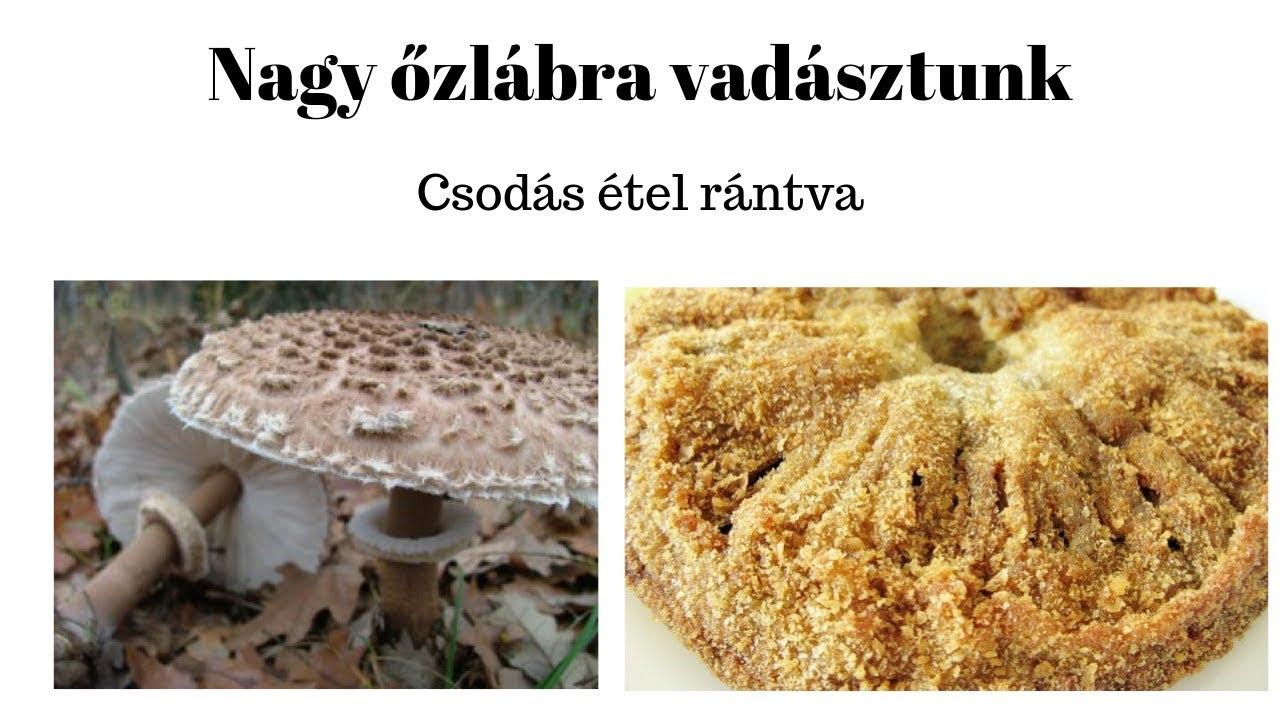 csodás ételek a parazitáktól való megtisztításhoz fascioliasis mi az