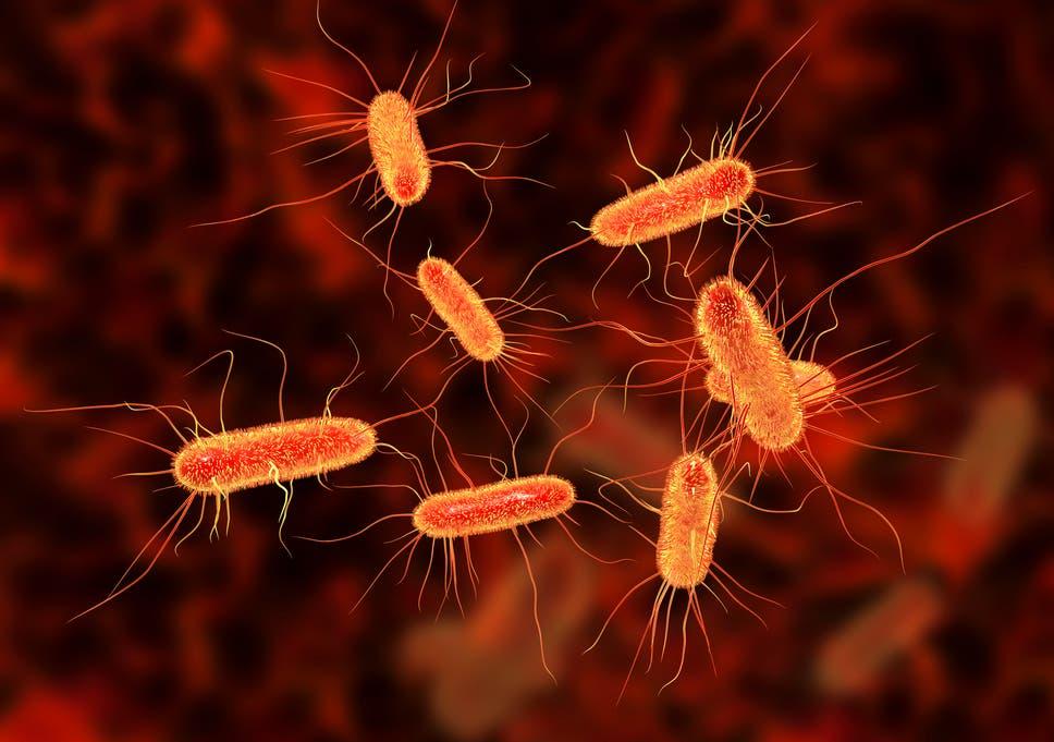 e coli kenet férfiakban