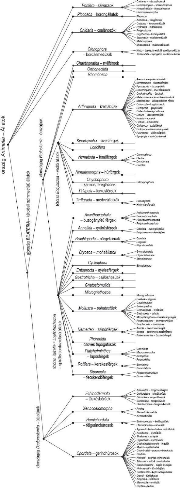 a helminthiasis megelőzésének jellemzői