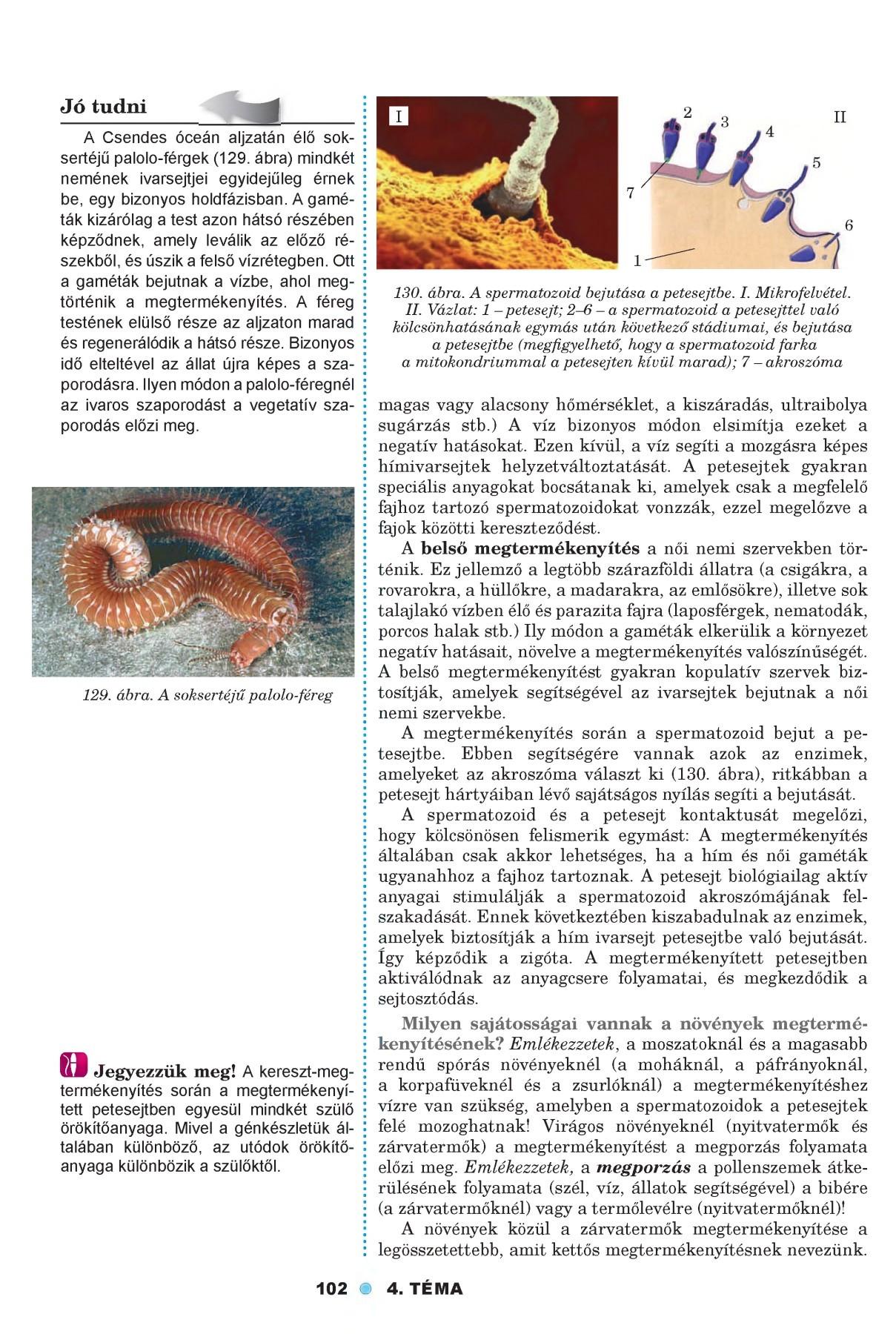 a nyál rossz szagú a szájából penicillus parazita