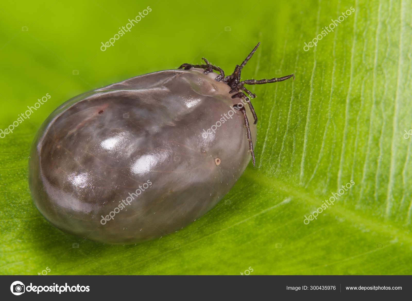 Haemogregarin paraziták. Haemogregarin paraziták. Szalmonellózis gyógyító antibiotikumok