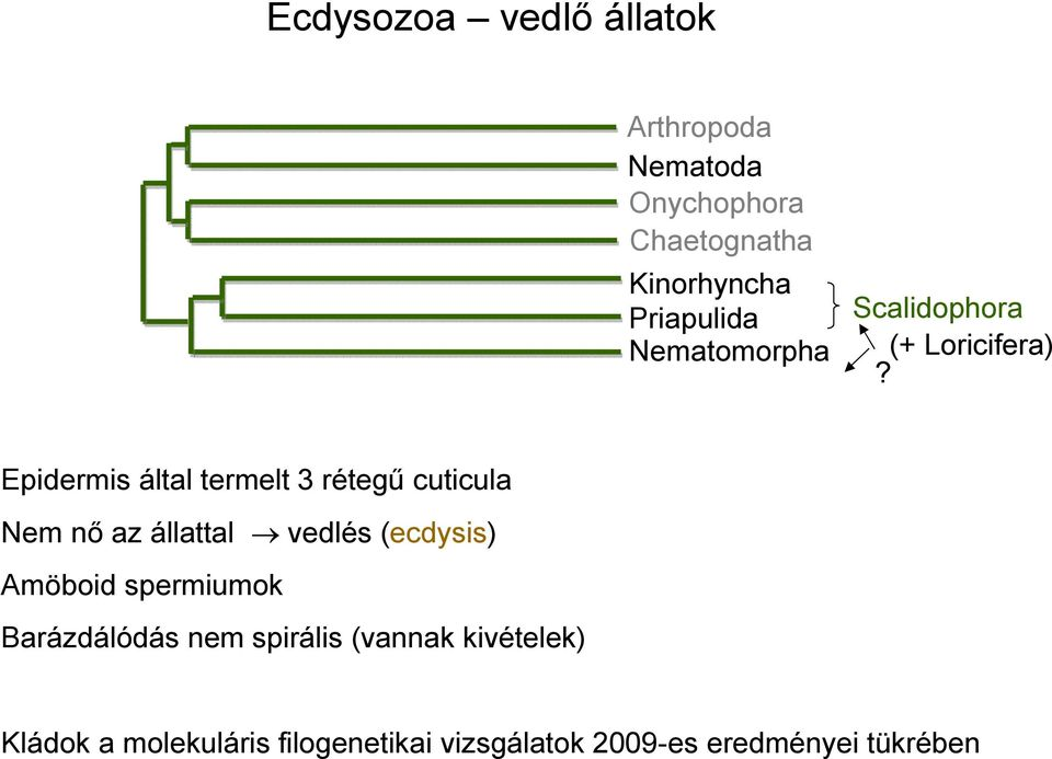 széklet az enterobiosis algoritmushoz